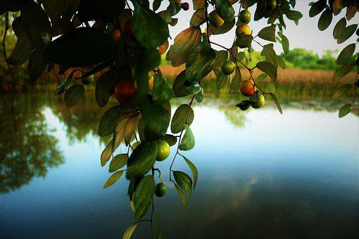 Fruit, Lake, Pineapple, Water, Summer, Tropical, Nature