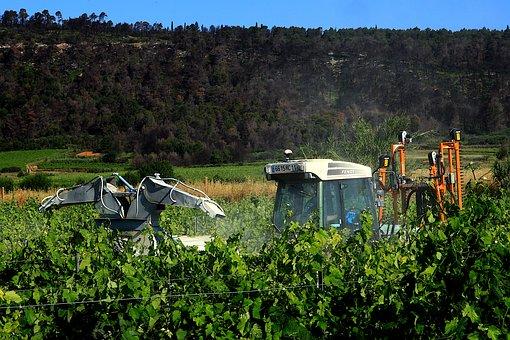 Vineyard, South, France, Treatment, Cup, Vine, Nature