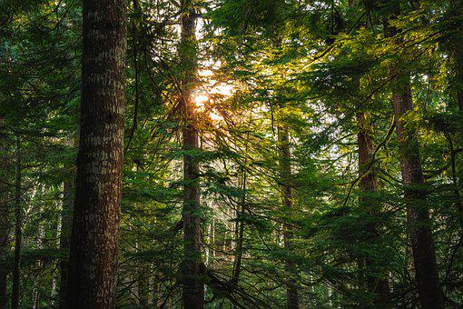 Trees, Sun, Forest, Landscape, Nature, Sunset, Sky