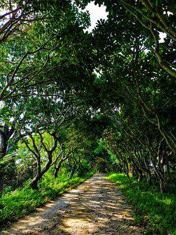 Road, Tropical, Travel, Natural, Outdoor, Landscape