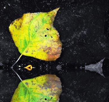 Leaf, Mirroring, Tree, Nature, Autumn