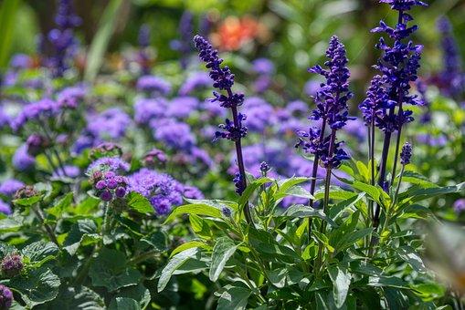 Flower Garden, Flowers, Purple, Violet, Small Flowers