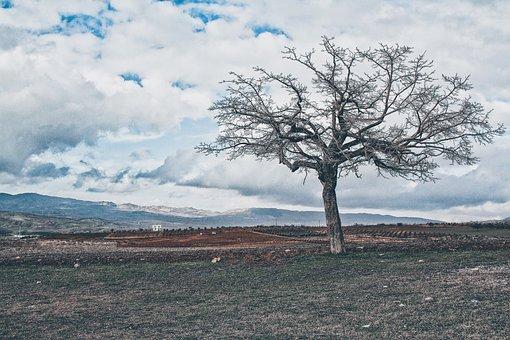 Tree, Nature, Landscape, Clouds, Turkey