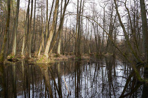 Swamp, Trees, Reflection, Nature, Water