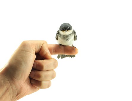 Finger, Hand, Bird, White, Background