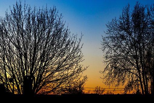 Tree, Landscape, Silhouette, Horizon, Nature, Sky