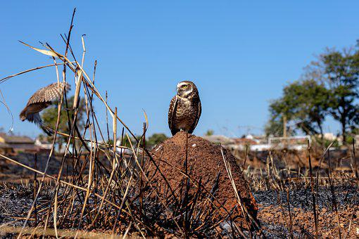 Owl, Paige, Animal, Nature, Predator, Outdoor, Pity