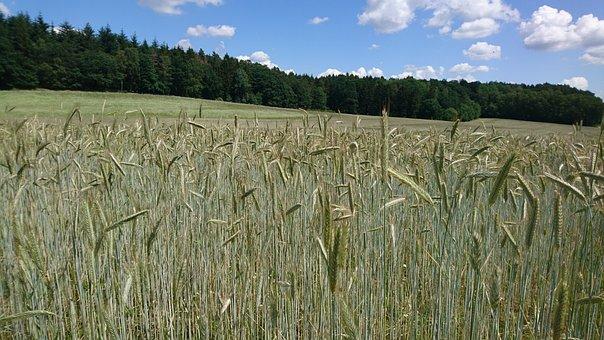 Field, Grain, Harvest, Summer, Blue, Sky, Clouds, Light