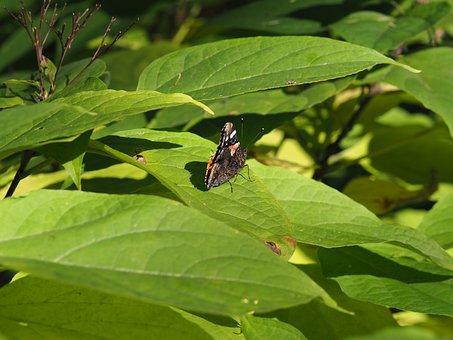 Butterfly, Botanical Garden, Vienna