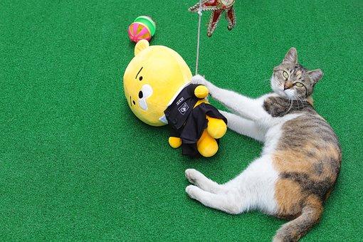 Cat, Street Cat, Gilnyangyi, Animal, Pets, Kitten, Cute