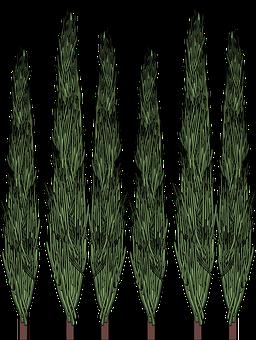 Cypress, Trees, Nature, Cedar, Tree, Green, Landscape