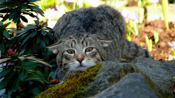 Domestic Cat, Animal World, Playful