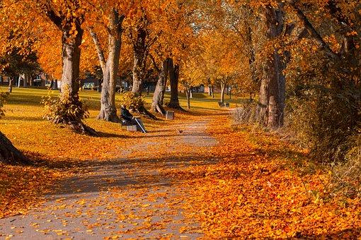 Leaves, Park, Autumn, Fall, Nature