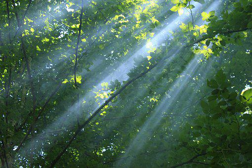 Ray, Forest, Light, Nature, Fantasy, Sun, Trees, Green