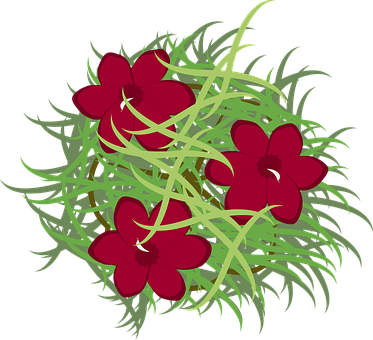 Oleander, Bush, Bloom, Blossom, Flora, Plant, Garden