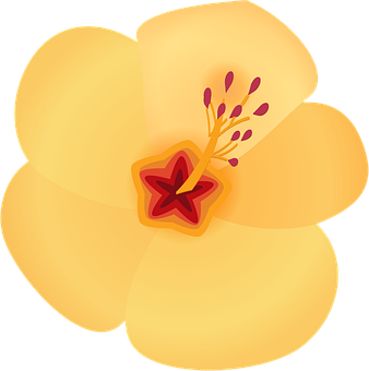 Hibiscus, Flower, Hawaii, Bloom, Blossom, Tropical