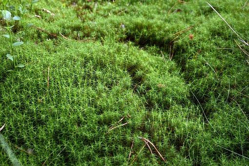 Moss, Nature, Forest, Green, Landscape