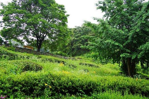 Park, Mountain, Tree, Forest, Summer, Landscape, Wood