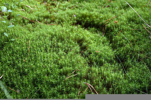 Moss, Nature, Forest, Green, Landscape, Macro, Ecology