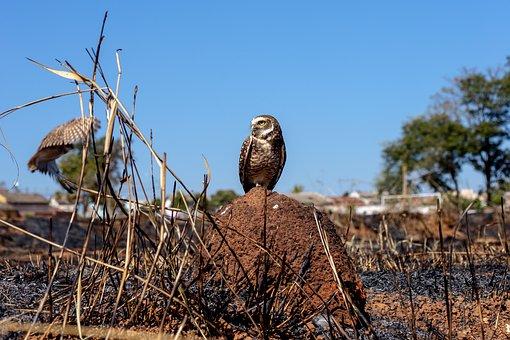 Owl, Paige, Animal, Nature, Predator