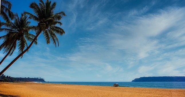 Tree, Tropics, Palm Tree, Shore, Get-away, Coral, Sand