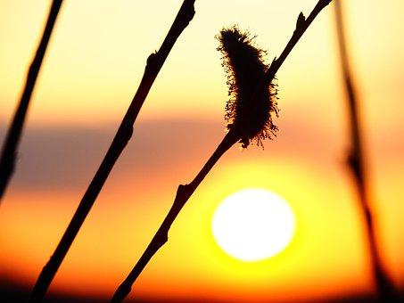 Sunset, Springtime, Nature, Spring, Season, Sun, Bright
