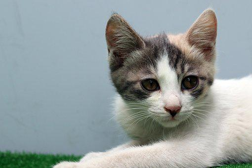 Cat, Street Cat, Gilnyangyi, Animal