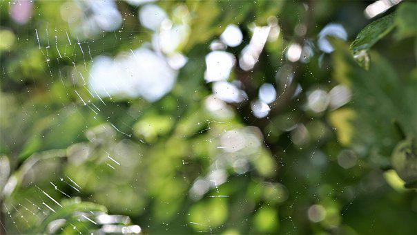 Cobweb, Beaded, Web, Dewdrop, Drop Of Water, Morgentau