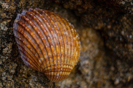 Galicia, Shell, Stones, Beach, Fisterra, Path, Santiago