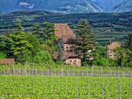 Germany, Vineyard, Buildings, House, Home, Field, Crops