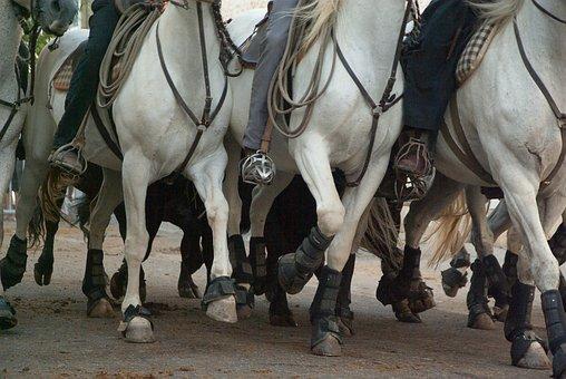 Camargue, Horses, Riders, Race, Bulls, Feria