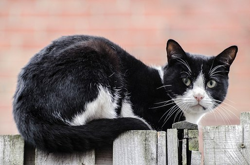 Cat, Acrobatic, Garden, Balancing, Neighbor, Expression