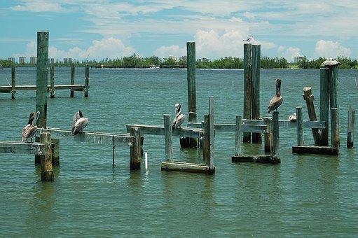 Pelicans, Dock, Piling, Bird, River, Water, Animal