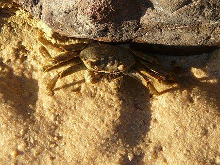 Crab, Sand, Stone, Red Sea, Egypt