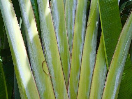 Palm, Stalks, Vegetation, Garden, Bonnet House, Ft