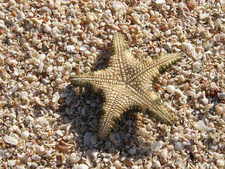 Star, Shells, Beach, Vacation, Travel, Ocean, Holiday
