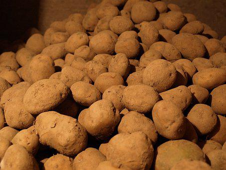 Potatoes, The Wine Cellar, Natural Vegetables, Eco Food