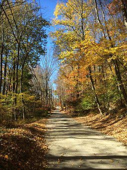 Road, Forest, Autumn, Sky, Leaves, Trees, Solitude