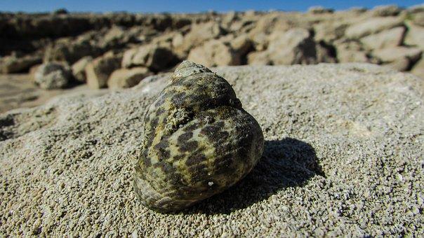 Shell, Crab Shell, Sea, Nature, Wildlife, Cyprus