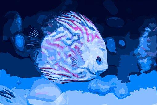 Small Fish, Diskus, Aquarium, Undersea World, Sea World