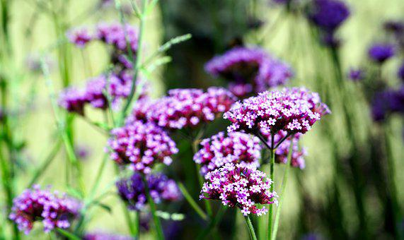 Wild Flowers, Blossom, Bloom, Nature