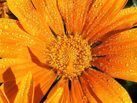 Closeup, Orange Flower, Yellow Flower