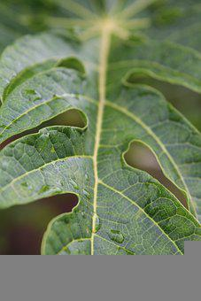 Leaves, Green, Nature, Plant, Texture
