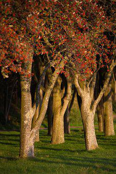 Denmark, Park, Tree, Nature, Landscape