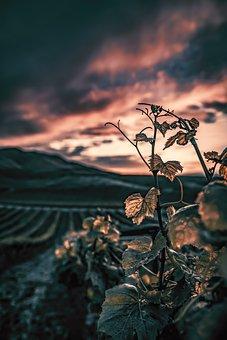 Sunset, Plant, Landscape, Summer, Sky