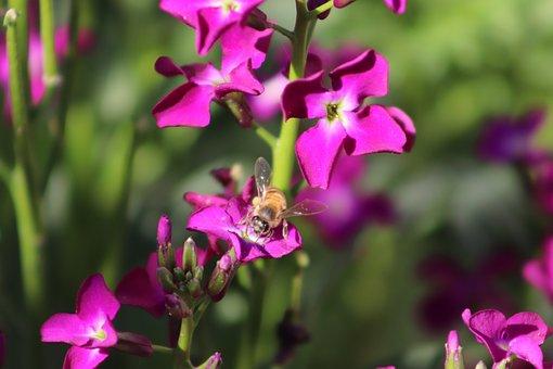 Bee, Natural, Nectar, Nature, Pollen, Spring, Flower