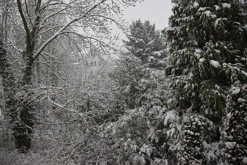 Winter, Tree, Snow, Nature, Landscape