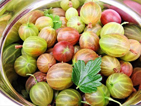 Gooseberries, Fruits, Soft Fruit