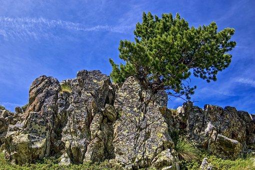 Pine, Tree, Conifers, Fir, Pine Mountain, Green