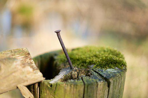Nail, Log, Rusty, Green, Nature, Wood, Old, Metal
